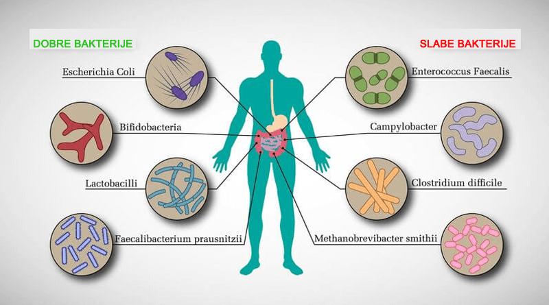 Antibiotiki slabe_dobre bakterije