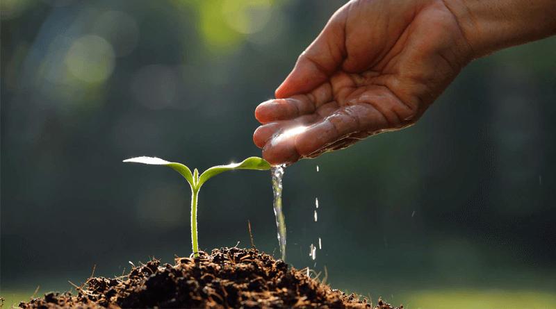 Zalivajte seme znotraj vas
