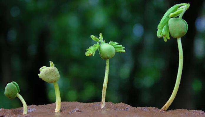 koraki osebne rasti